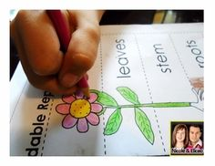 """Fun """"Foldable Plant Report"""" activity for elementary science!"""