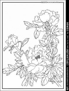 image result for peonies coloring page - Chrysanthemum Book Coloring Pages