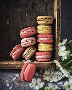 Life is like macarons.. full of colors..❤ ✨✨⏬FEATURED⏬✨✨.▪▪▪▪▪▪▪▪▪▪▪▪▪▪▪▪▪▪▪▪▪▪▪▪▪▪▪▪▪▪▪▪▪▪▪▪▪...