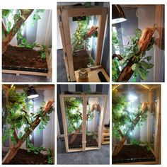 Handmade bespoke arboreal vivarium made For a Chameleon. We Love Exotic Pets.  Made By Boyles Pet Housing