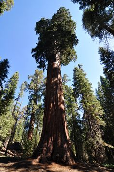 Sequoia & Kings Canyon National Park in Three Rivers, CA