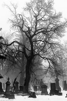 black and white, cemetery, and cross image Arte Do Mickey Mouse, Old Cemeteries, Graveyards, Gothic Wallpaper, Creepy Photos, Cemetery Art, Dark Photography, Aesthetic Pictures, Cool Pictures