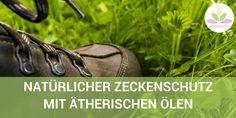 Natürlicher Zeckenschutz mit Kokosöl und ätherischen Ölen | AROMA 1x1 Daily Life Hacks, Camping, Tick Bite, Muscle Pain, Natural Medicine, Organic Beauty, Campsite, Useful Life Hacks, Campers