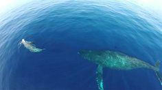 Un Drone Captura Algo Raro E Inusual Que Sucede En El Océano. No Te Lo Creerás