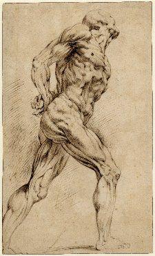 Peter Paul Rubens - anatomical studies. Art Experience NYC www.artexperiencenyc.com/social_login/?utm_source=pinterest_medium=pins_content=pinterest_pins_campaign=pinterest_initial