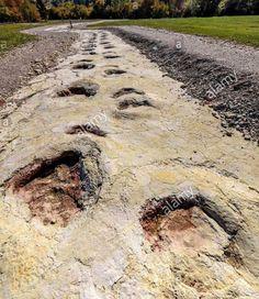 Giant Jurassic-era Dinosaur Made the World's Longest Tracks Around 150 Million Years Ago