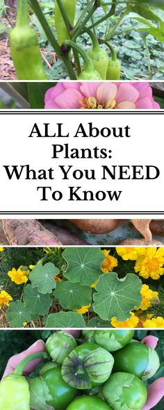 Finally, all the plant questions you need to ask yourself in one place! Everything you need to know before selecting your plants as well as when and how to plant and what to do after your plants are out in the garden on their own! :)