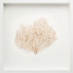 Natural Coral Sea Fan Finished In Gold with White Shadow Box Frame $249 This is the one I ordered, international shipping avalaible for once :)