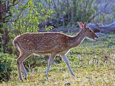 Someshwara Wildlife Sanctuary - in Karnataka, India