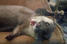 Playful Otter Gives Us a Cheeky Wink