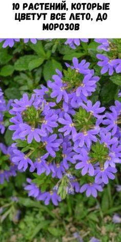 Fake Plants Decor, Plant Decor, Beautiful Gardens, Beautiful Flowers, Zinnias, Vegetable Garden, Garden Landscaping, Planting Flowers, Garden Design