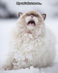Enjoying the first snow...
