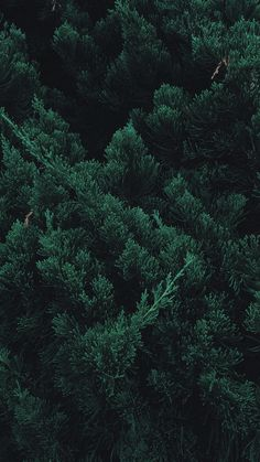 Wallpaper leaves, plant, green, branches – My Pin Page Forest Wallpaper Iphone, Ed Wallpaper, Plant Wallpaper, Nature Wallpaper, Wallpaper Quotes, Dark Green Wallpaper, Leaves Wallpaper Iphone, Aesthetic Backgrounds, Aesthetic Iphone Wallpaper