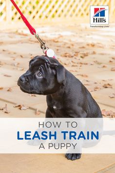 Are you training your puppy to walk on the leash? Or — let's be honest here — is your puppy training you? Leash training can be difficult, but it's a necessary skill if the two of you are to enjoy wal Puppy Training Tips, Training Your Dog, Agility Training, Dog Agility, Potty Training, Training Collar, Training Equipment, Crate Training, Puppy Obedience Training