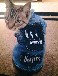 Need to get my cats some cool jackets! Not Beatles though.