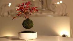"""DozoDomo vous en parlait il y a quelques mois. C'est désormais une réalité, vous pouvez vous procurer un bonsai volant ! Baptisé """"Air Bonsai"""", il est en vente sur le site d'Hoshinchu pour la modique somme de 30,240¥ (soit environ 270€) L'invention imaginée parHikaru Hoshi a fait énormément parler d'elle après queles médias du monde …"""