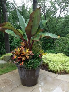 Here, we share tons of beautiful tropical backyard ideas for your ultimate reference! Pick the best tropical backyard that you really love now! Patio Plants, Outdoor Planters, Garden Planters, Outdoor Gardens, Stone Planters, Outdoor Potted Plants, Fall Planters, Tropical Garden Design, Tropical Landscaping
