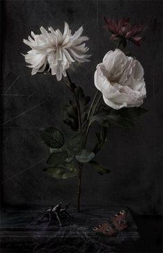Flora Nova by Paul Kilsby