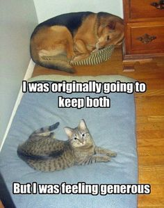 Cats can be VERY generous (when in the proper mood!).  ;o)