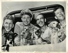 Pilots and dogs. 1944- Four dogs, belonging to airmen at a U.S. Liberator base in the Marianas