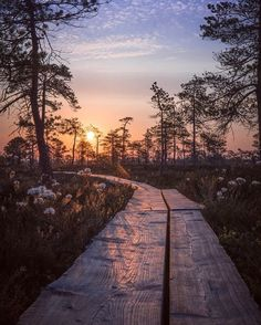 ✿ ❤ Sunrise in the swamp. Spent the last night wandering in the Kauhanevan-Pohjankankaan national park. Voyager Loin, Destinations, Explorer, City Landscape, Beautiful Sunrise, Blog Voyage, Nordic Design, Finland, Wander