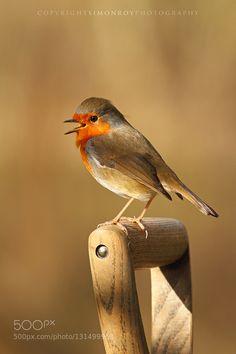 Robin Singing #PatrickBorgenMD