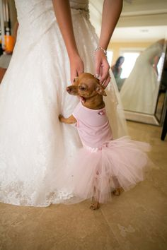 Chihuahua in a little tutu at the wedding! @Abby Christine Christine Christine Christine Seiner
