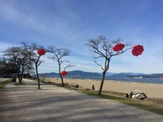 Vancouver - Rainblossom Public Art - Red Umbrellas suspended on Trees at Spanish Banks