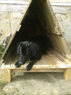 pallet dog house - fill with warm bedding or cedar chips for a warm outside-time spot in the winter