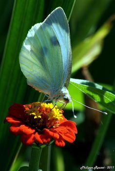 Lovely Butterfly & Flower