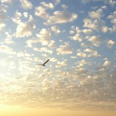 Daybreak • »✗∞♥∞✗« •