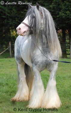 http://www.kentgypsyhorses.com/wp-content/gallery/lloyds/dsc_0073.jpg