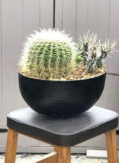 Cactus bowl arrangement.