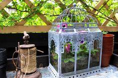 Gardening time ♥ Bird Feeders, Terrarium, Gardening, Lifestyle, Outdoor Decor, Home Decor, Homemade Home Decor, Garten, Terrariums