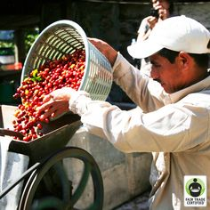 A new perspective can change everything. See how in this guest blog post from Reunion Island Coffee, and leave a comment of support for the hard working coffee farmers in Chiapas, Mexico! #FairTrade #coffee