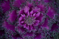 Fractals in nature... by Neil Panchal, via Flickr