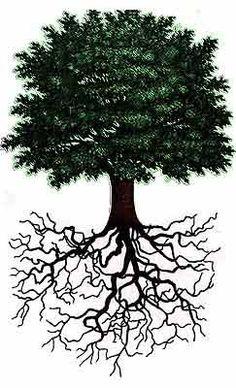 Brésil : Il existe une solution pour déplanter les arbres et les replanter!