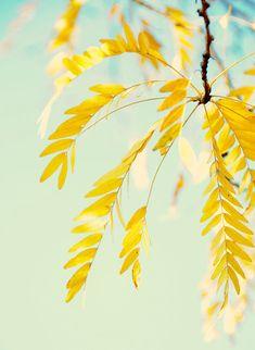 Mint - yellow