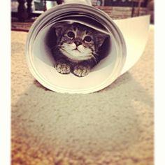 Cat Tube