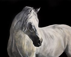 Morning Light - Equine Artist Tony O'Connor