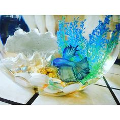 Aquarium set-up is an important part of fish life! Learn how to get yours ready. Aquarium Setup, Home Aquarium, Fishing Life, Pet Home, Animal House, Betta Fish, Fun To Be One, Fish Tank, Amphibians