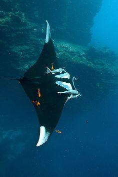 flag of Ocean Simply breathtaking - sea life Underwater Creatures, Underwater Life, Beautiful Sea Creatures, Animals Beautiful, Orcas, Delphine, Sea And Ocean, Sea World, Deep Sea