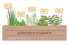 wooden crate of farm fresh cooking herbs with labels in wooden box. greenery basil rosemary chives thyme oregano with text. for advertising poster banner Herbal Witch, Cooking Herbs, Crop Pictures, Green Witchcraft, Poisonous Plants, Good Spirits, Garden Boxes, Garden Styles, Horticulture