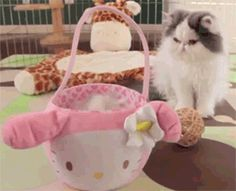 :3 ♥ |  hello kitty -  #cute -  mum -  #peekaboo -  #kitten