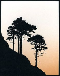 Scots Pine Trees Hand-Cut Papercut large sloping by JohnSpeight
