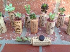 Succulent Cork Magnets- Great wedding favors, hostess gift, birthday present