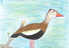 The 2013 Florida Junior Duck Stamp of Samuel Ewing, 14. honorable mention in Group 2, grades 4-6. DDWS photo
