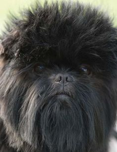 This looks like my Bentley on a bad hair day