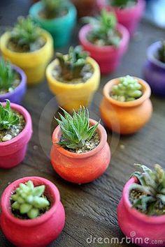 Cacto miniatura en plantadores coloridos