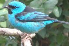 fauna brasileira - Pesquisa Google